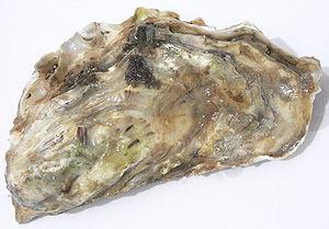 (C) Wikimedia http://en.wikipedia.org/wiki/Oyster